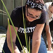Student planting dune grass
