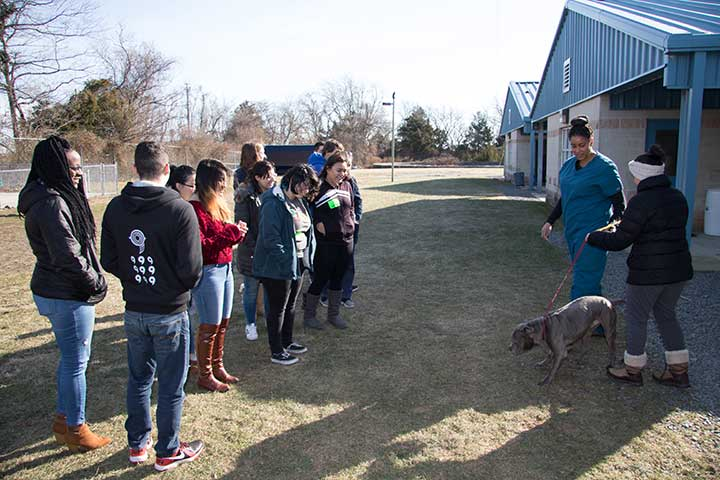 Students at animal shelter